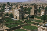 Hydrangea Gardens, Suburb of Ar Rawdah, Sana'A, Yemen Photographic Print