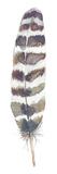 Feather Drift I Reproduction procédé giclée par Sandra Jacobs