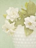 Candy Flowers III Giclee Print by Shana Rae