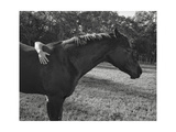 Horse and Hand Photographic Print by Henri Silberman