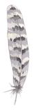 Feather Drift II Giclee Print by Sandra Jacobs