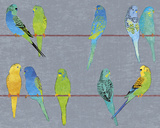 Budgies Giclee Print by Maria Mendez