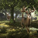 Big Buck Whitetail Deer Autocollant par Mike Colesworthy