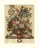 June Giclee Print by Robert Furber