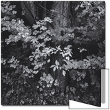 Forest Foliage Leaves Posters by Henri Silberman