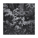 Forest Foliage Leaves Photographic Print by Henri Silberman
