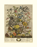 May Giclee Print by Robert Furber