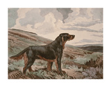 Gordon Setter Premium Giclee Print by Reuben Ward Binks