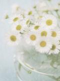 Candy Flowers I Giclee Print by Shana Rae