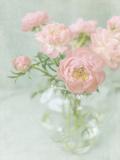 Candy Flowers II Giclee Print by Shana Rae