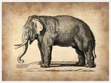 Vintage Elephant Plastic Sign by  NaxArt