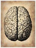 Vintage Brain Plastic Sign by  NaxArt