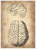 Vintage Brain Anatomy Plastic Sign by  NaxArt