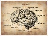 Vintage Brain Map Anatomy Plastskilt av  NaxArt