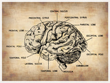 Vintage Brain Map Anatomy Plastic Sign by  NaxArt