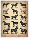 Vintage Horses Collection Plastic Sign by  NaxArt