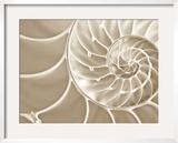 White Swirls Framed Photographic Print by Doug Chinnery