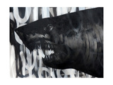 Black on Black Shark Posters by Shark Toof