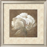 Tawny Peony Prints by Rich Wilder