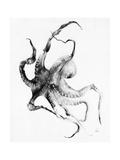 Blæksprutte Plakater af Alexis Marcou