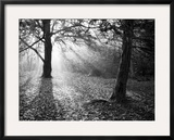 Autumn Burst Framed Photographic Print by Doug Chinnery