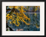 Yellow Leaves2 Framed Photographic Print by Nejdet Duzen