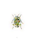 Ladybird Premium Giclee Print by Alexis Marcou