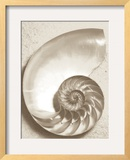 Sea Shell Framed Photographic Print by Doug Chinnery