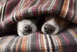 Couple of Dogs Photographic Print by Javier Brosch