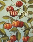 Pitanga Frutas Tropicales Giclee Print by  Graffi*tee Studios