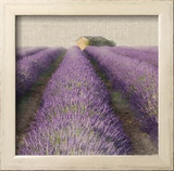 Lavender Field Posters by Bret Staehling