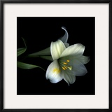 Yellow Dusted Lily Framed Photographic Print by Magda Indigo