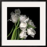 Frayed Tulips Framed Photographic Print by Magda Indigo