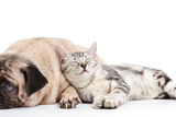 Dog and Cat Photographic Print by  ifong