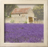 Tuscan Lavender Prints by Bret Staehling