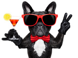 Cocktail Party Dog Photographic Print by Javier Brosch