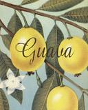 Guava Frutas Tropicales Giclee Print by  Graffi*tee Studios