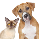 Cat and Dog Portrait on A White Background Photographic Print by  Jagodka