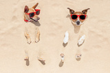 Couple of Dogs Buried in Sand Photographic Print by Javier Brosch