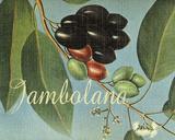 Jambolana Frutas Tropicales Giclee Print by  Graffi*tee Studios
