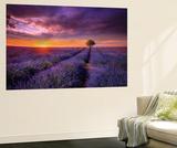 Lavender at Sunset Fototapete von Marco Carmassi