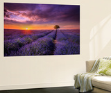 Lavender at Sunset Wall Mural by Marco Carmassi
