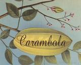 Carambola Frutas Tropicales Giclee Print by  Graffi*tee Studios