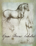 Da Vinci's Equus Ferus Cabeltus Giclee Print by  Graffi*tee Studios