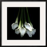 White Callas Framed Photographic Print by Magda Indigo