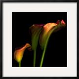 Calla Lily 2 Framed Photographic Print by Magda Indigo