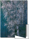 Silver Threads Posters by Doug Chinnery