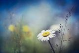 Summer Solstice Photographic Print by Ursula Abresch