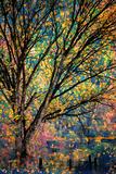 Ursula Abresch - Kootenay Fall 3 Fotografická reprodukce