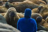A Man Surrounded by Walruses Off Hooker Island Photographic Print by Andy Mann